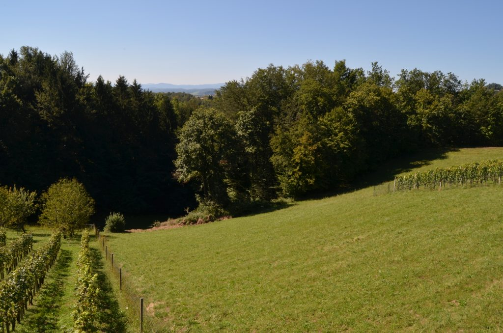 DSC_0196 travnik gozd