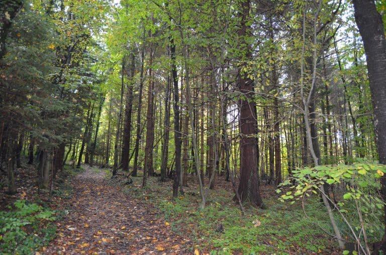 Gozd 1