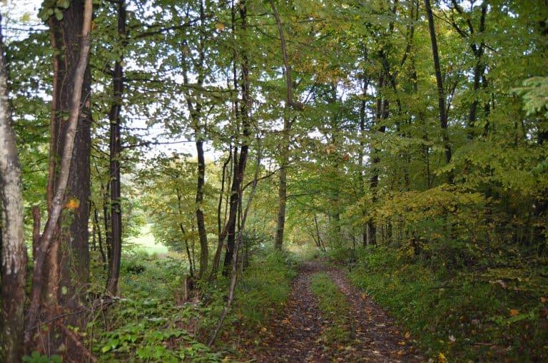 Gozd 2