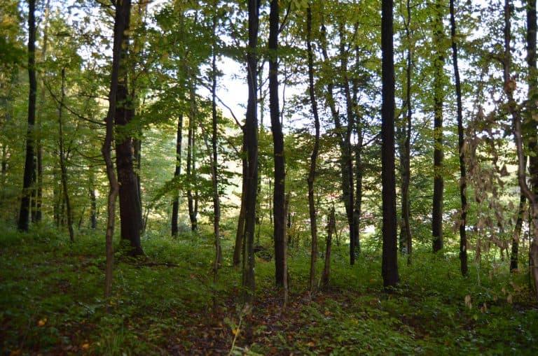 Gozd 3