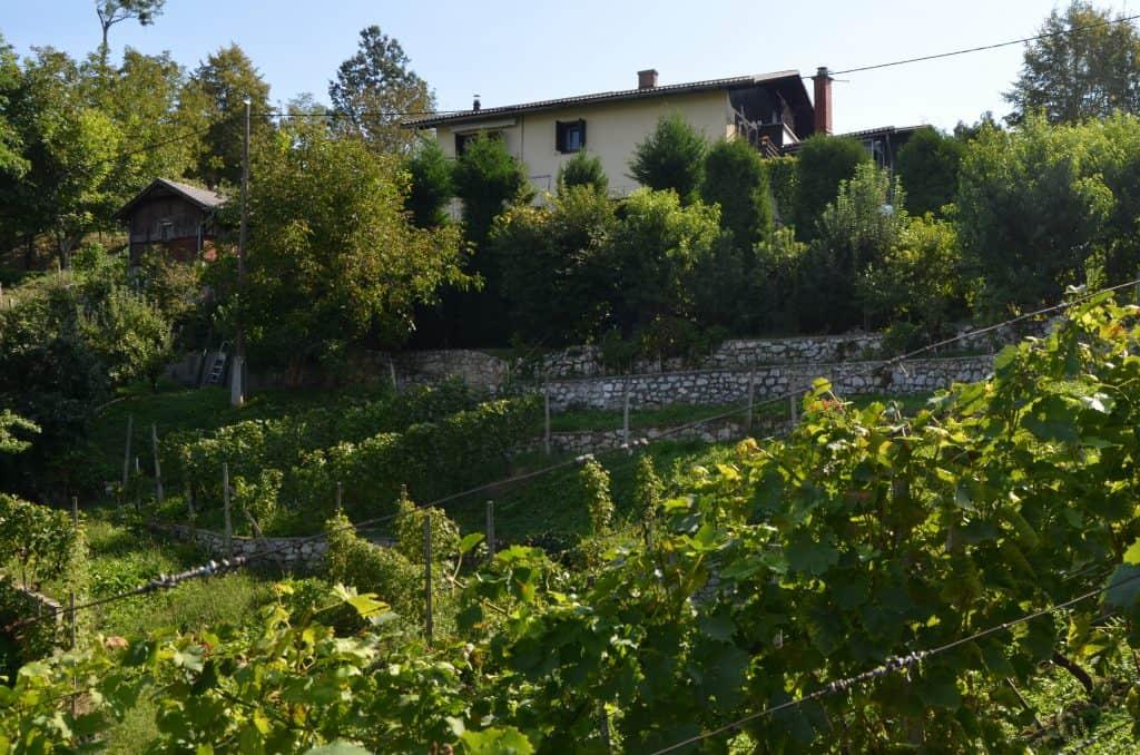 4 Pogled iz vinograda na celo hišo