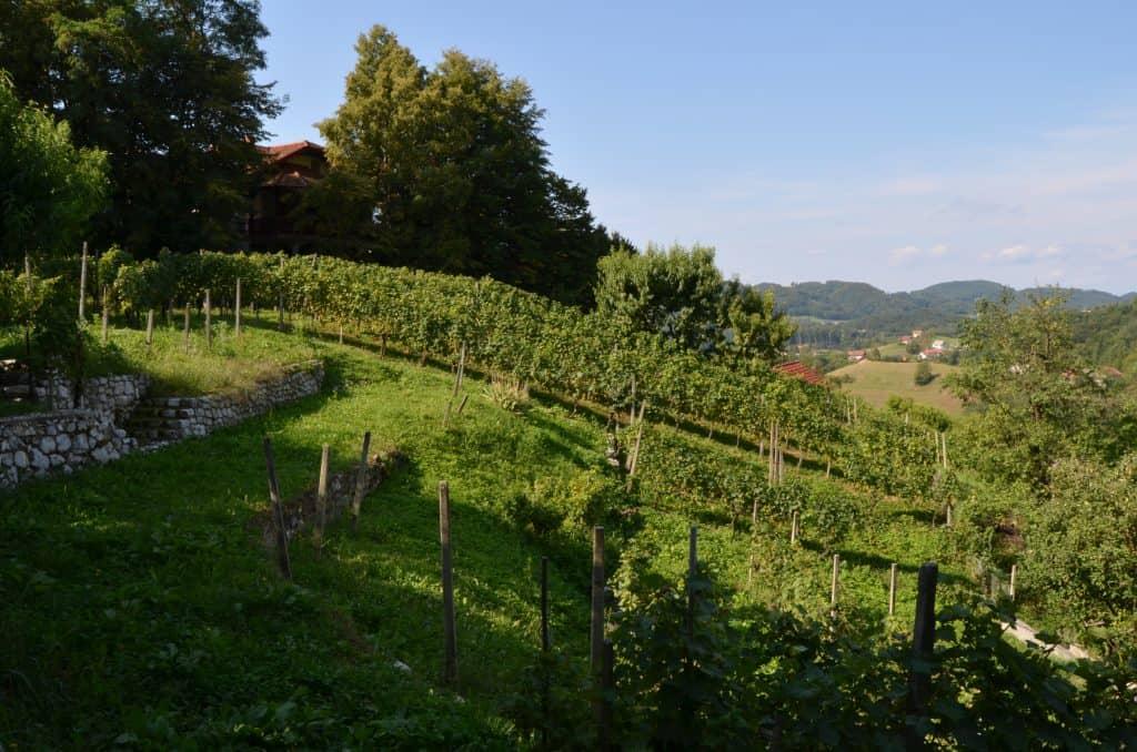 Pogled iz hiše na sadovnjak in vinograd