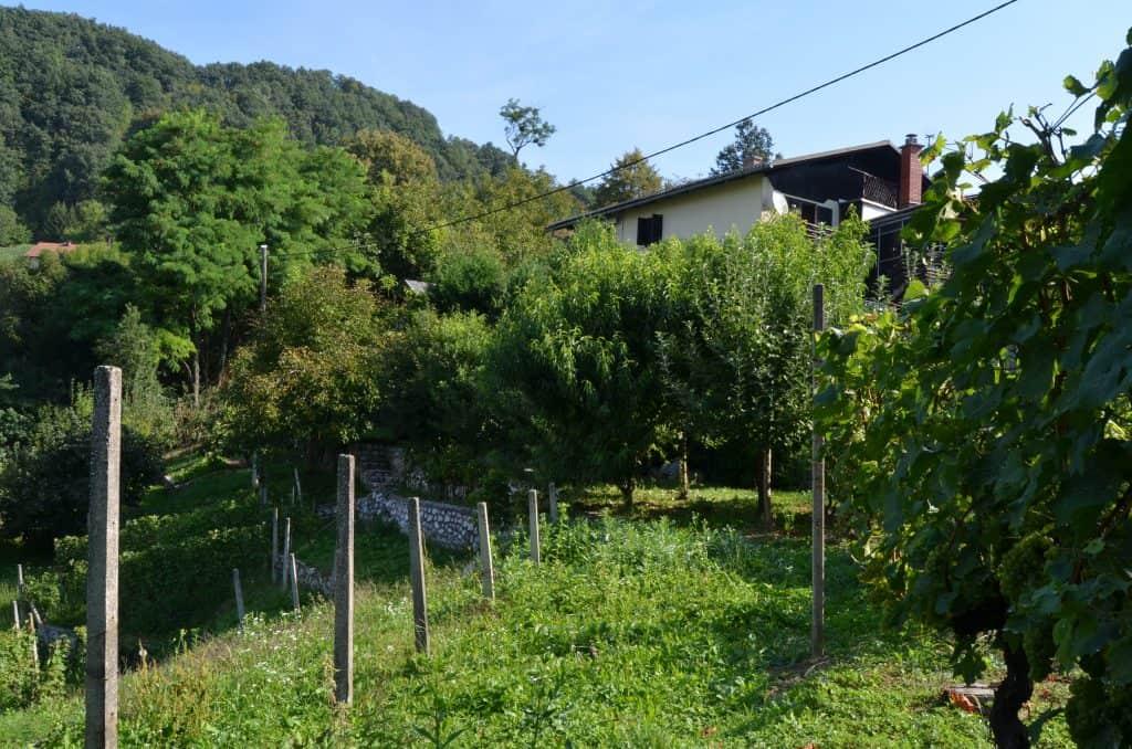 Pogled iz vinograda na hišo